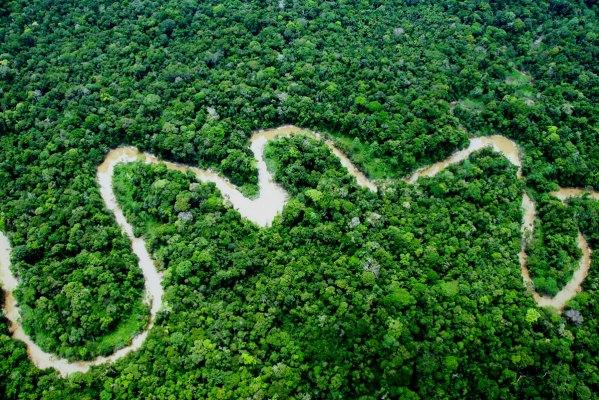 yaguas-bosque-sernanp