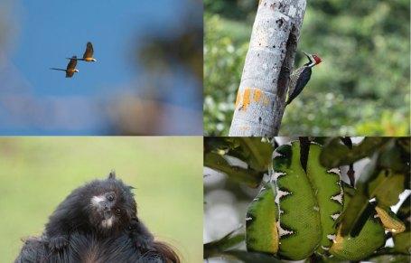 Las ACR de Loreto presentan una gran oportunidad de aprovechamiento sostenible debido a su biodiversidad. Foto: Spectabilis/SPDA