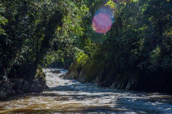 Bosque de Protección Alto Mayo. Foto: Conservación Internacional