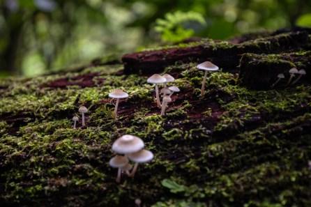 Área de conservación regional Cordillera Escalera, sector Catarata Ahuashiyacu. Esta se encuentra ubicada en la zona de amortiguamiento del Parque Nacional del Río Abiseo. Foto: Diego Pérez / GIZ