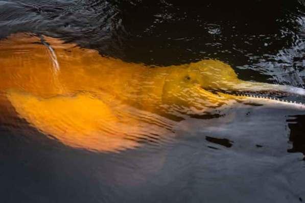 Foto: Diego Pérez / WWF Perú