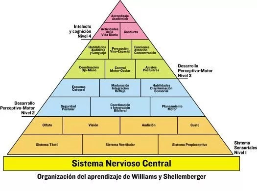 piramide-desarrollo- williams-shellemberger
