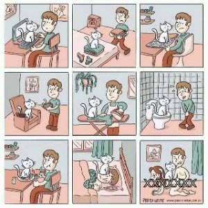 cosas de gatos