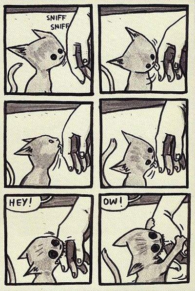 gato mimos