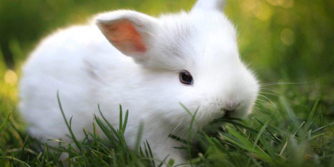 El conejo como mascota doméstica