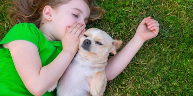Enseña a tus hijos a que respeten los animales