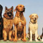 razas caninas