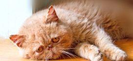 ¿Sabes qué hacer si tu gato sufre un golpe de calor?