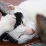 gatos dormilones