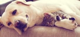 Los mejores vídeos de perras adoptando a gatitos