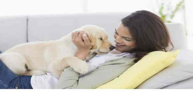 ¿Qué hacer para que nuestro perro cachorro nos haga caso?