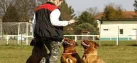 Aprende a entender a tu mascota: ladrar es posible