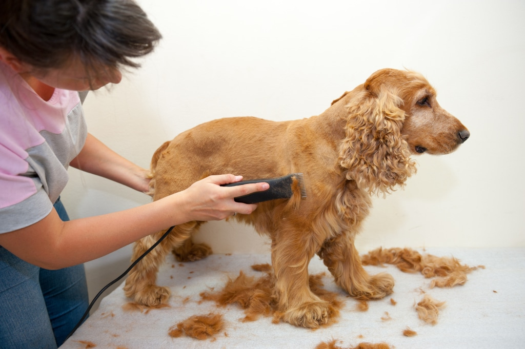 como refrescar a tu perro en verano