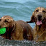 Cómo refrescar a tu perro en verano