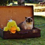 cómo viajar con gatos