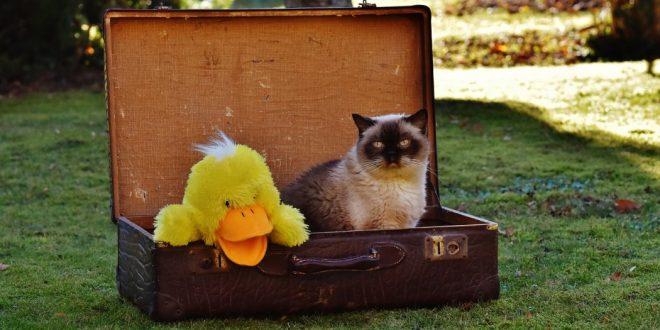 Cómo viajar en coche con gatos