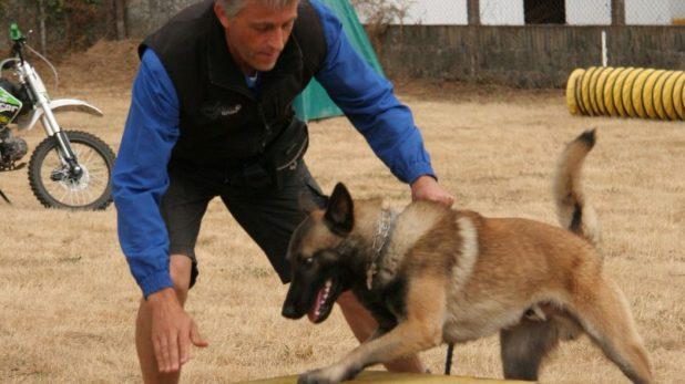 modelado adiestramiento canino