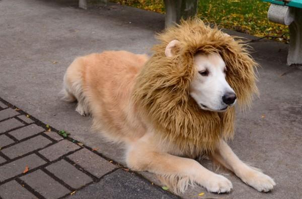 La nueva imagen de ¨Monaguillo¨ busca una mascota mas cercana al pueblo.