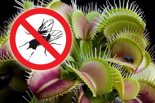 Plantas carnívoras como esta son entrenadas para llevar una dieta estrictamente vegetariana.