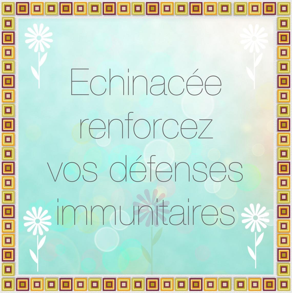 Renforcez vos défenses immunitaires avec l'échinacée