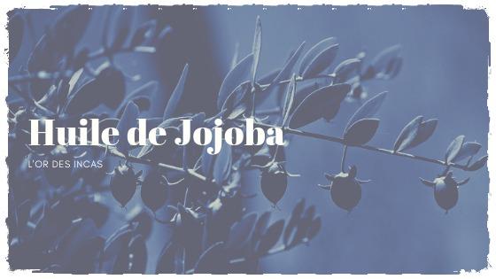You are currently viewing L'huile de jojoba, l'alliée des peaux grasses