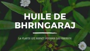 L'huile de bhringaraj refait pousser les cheveux