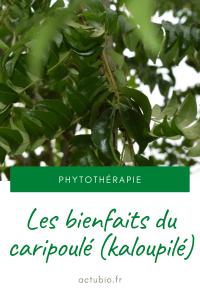 Bienfaits et propriétés du Caripoulé (Kaloupilé ou kadi patta)