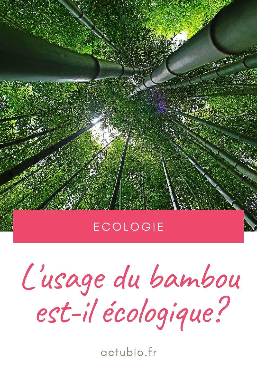 You are currently viewing Le bambou : une solution pas vraiment écologique ?