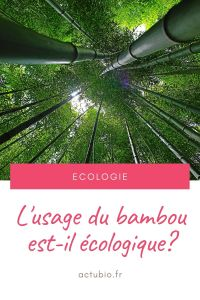 Read more about the article Le bambou : une solution pas vraiment écologique ?