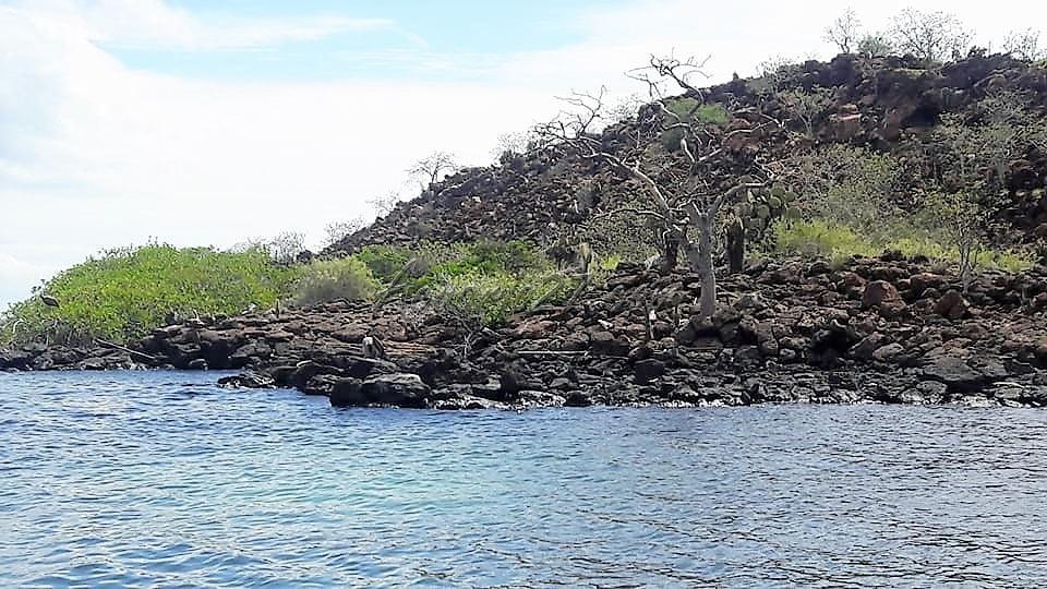 Fotografía: Miriam Tafur, Islas GalápagosFotografía: Miriam Tafur, Islas Galápagos