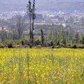 Amarillo:- foto Acuario27