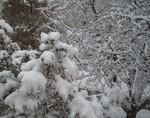 TEMA SĂPTĂMÂNII: Iarna în jurul lumii