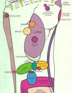 Foot reflexology chart also to map sole zones and organs rh acupressurewellness