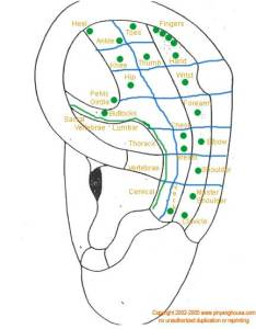 Ear chart also to map acupuncture points and organs auriculotherapy rh acupressurewellness