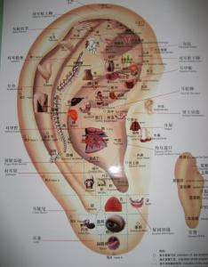 Auricular therapy chart also chen jung jennifer robinson  acupuncture and integrated chinese rh acupuncturejen