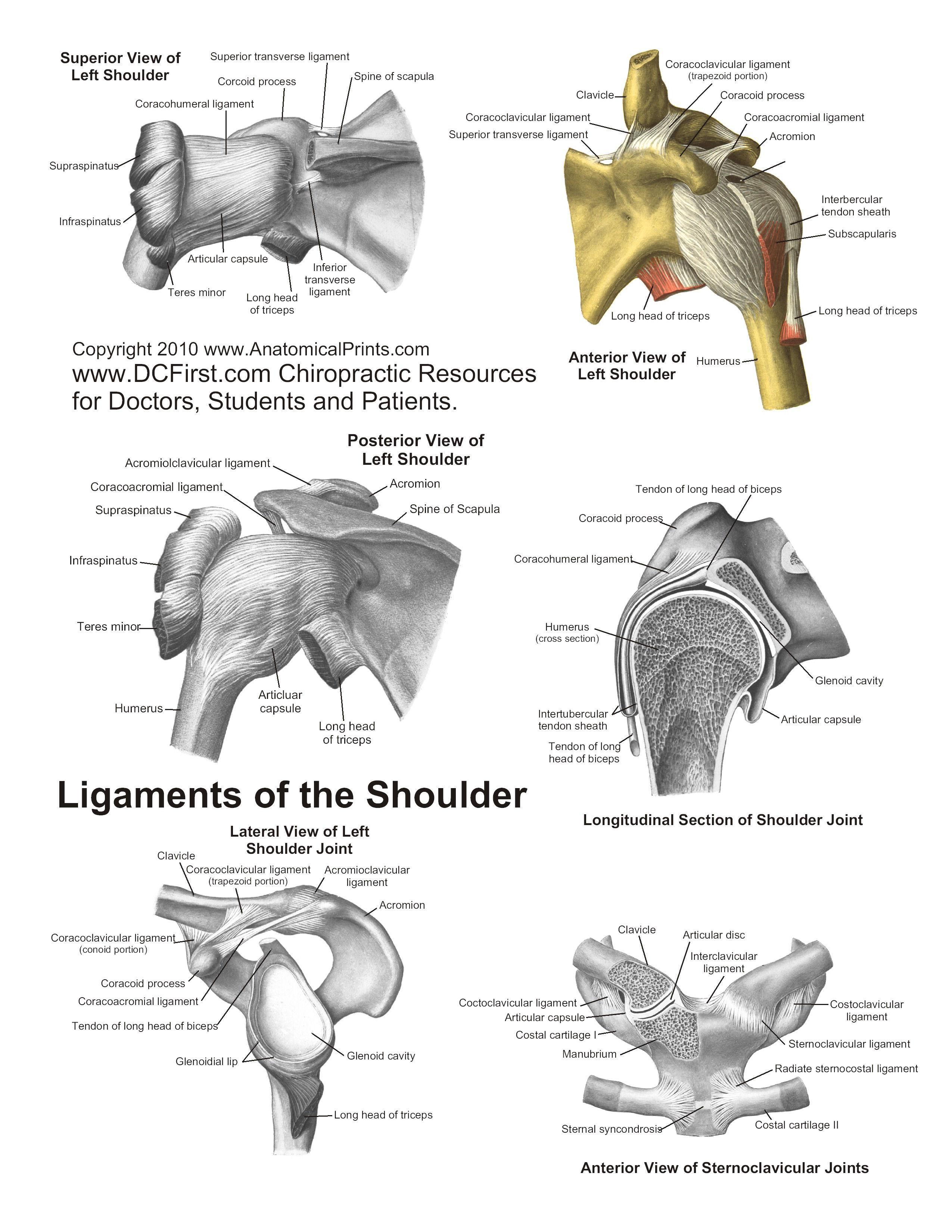 Printable Free Anatomy Study Guides