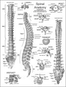 Free Acupuncture Charts