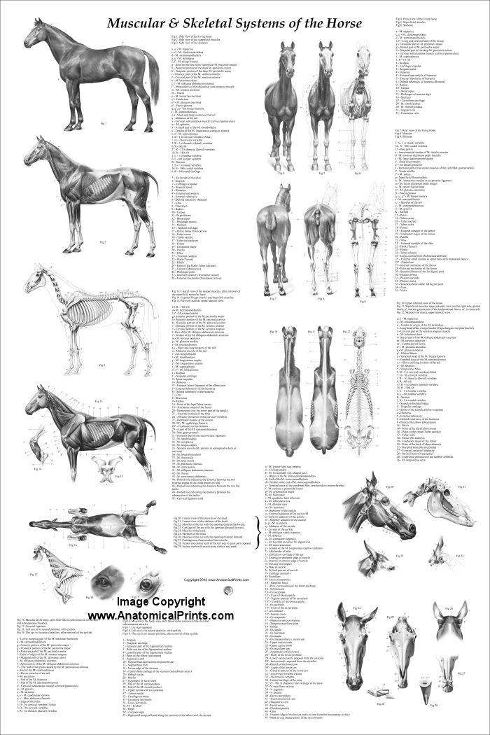 Human Anatomy And Physiology Elaine Marieb And Katja Hoehn