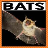 There are so many different bat activities that you can do at home or in the classroom. This page allows you to quickly see our favorite bat ideas, activities and printables that have been featured on A Dab of Glue Will Do.