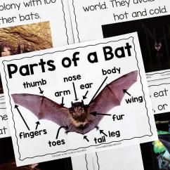 Bird Life Cycle Diagram 2009 Toyota Yaris Radio Wiring Bats: An Animal Study