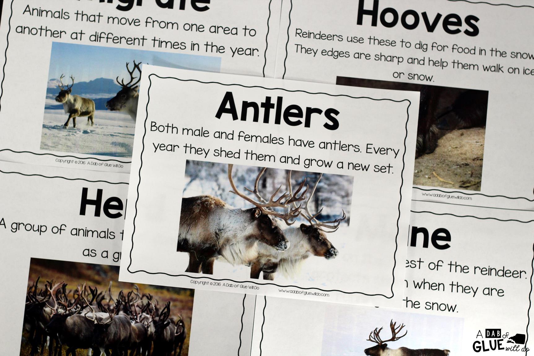 Reindeer Facts An Animal Study