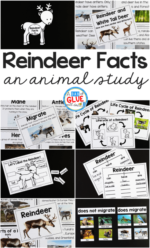 hight resolution of Reindeer Facts : An Animal Study - A Dab of Glue Will Do