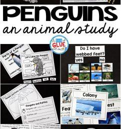 Penguins: An Animal Study - [ 2048 x 1238 Pixel ]