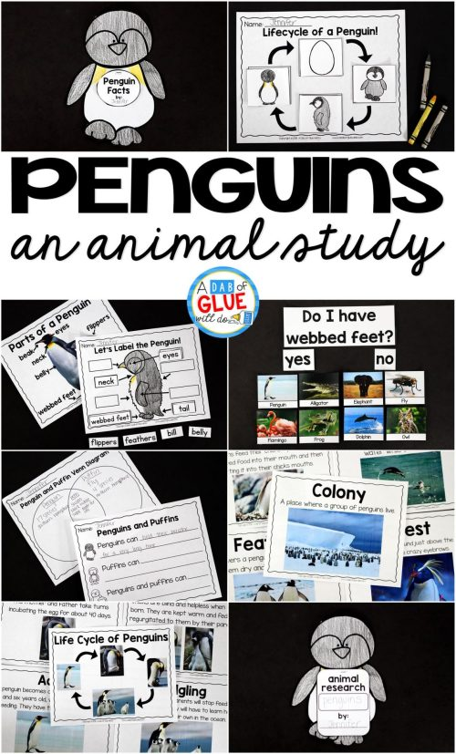 small resolution of Penguins: An Animal Study -