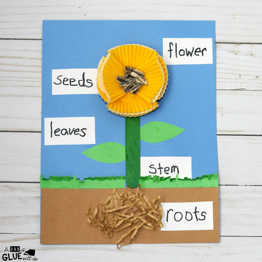 Parts Of A Plant For Kindergarten