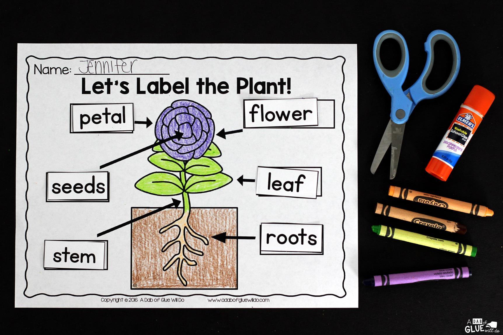 Plants Unit Powerpoint Lessons Printables