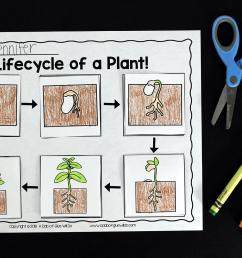 Plants Unit (PowerPoint [ 1149 x 1723 Pixel ]