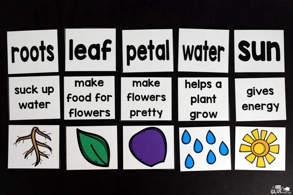medium resolution of Plants Unit (PowerPoint