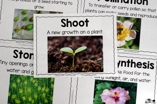 small resolution of Plants Unit (PowerPoint