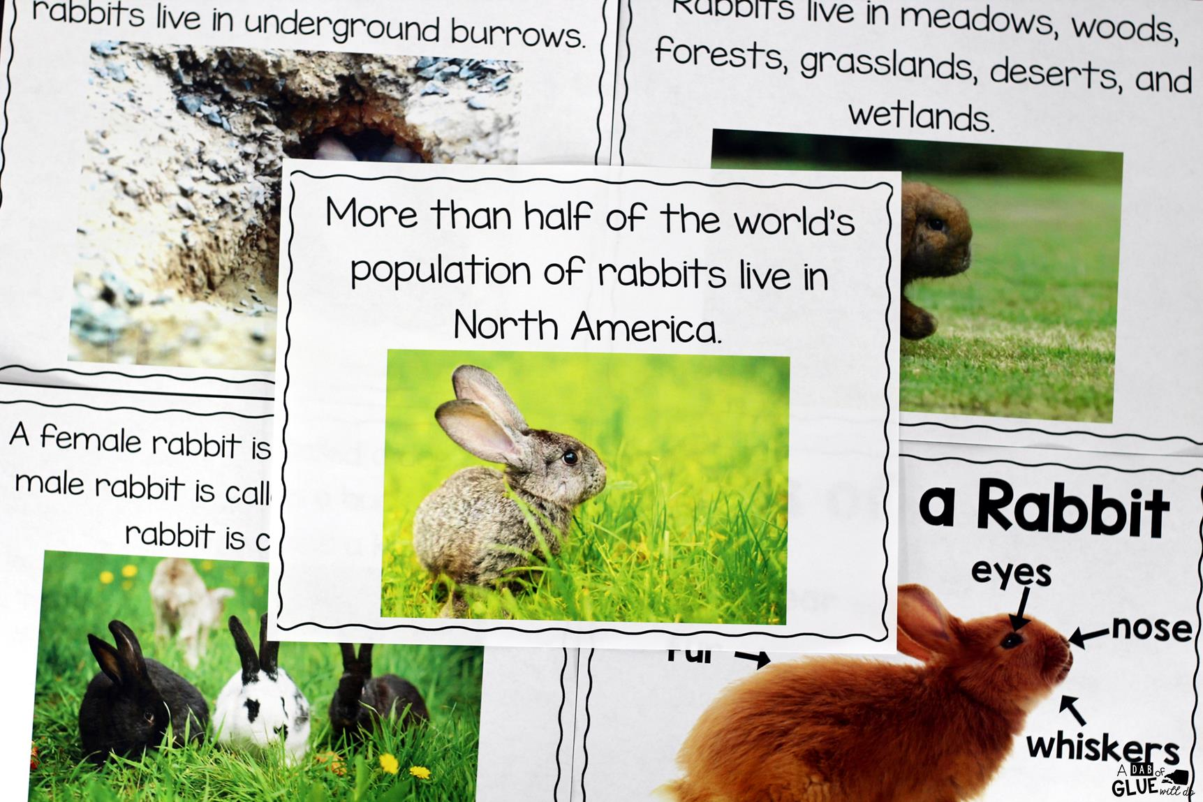 Rabbit Facts An Animal Study